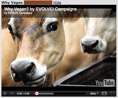 Why Vegan? video by Evolve Campaigns