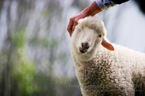 Tamara Kenneally Photography - Trouble getting a pat.